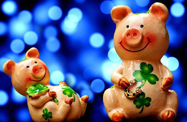 Приметы на год свиньи